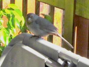 birdondeck