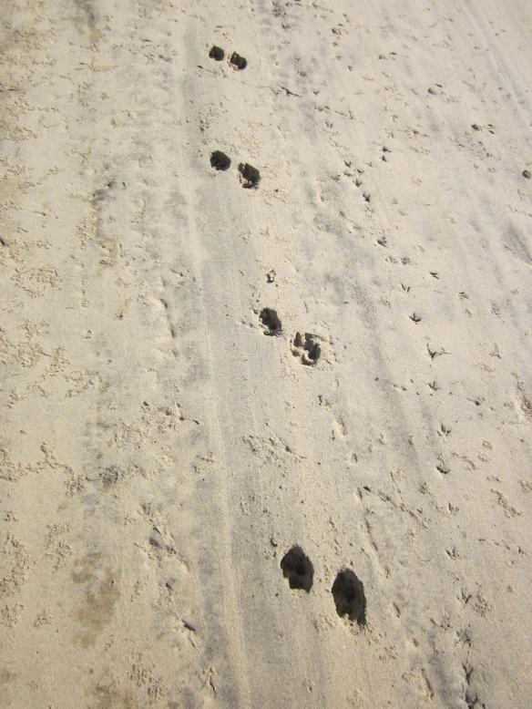 coyoteprintlagoon