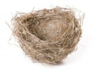 8414969-empty-nest-isolated-on-white-with-space-for-text