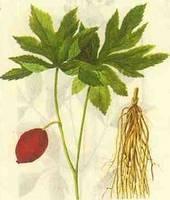 Podophyllin