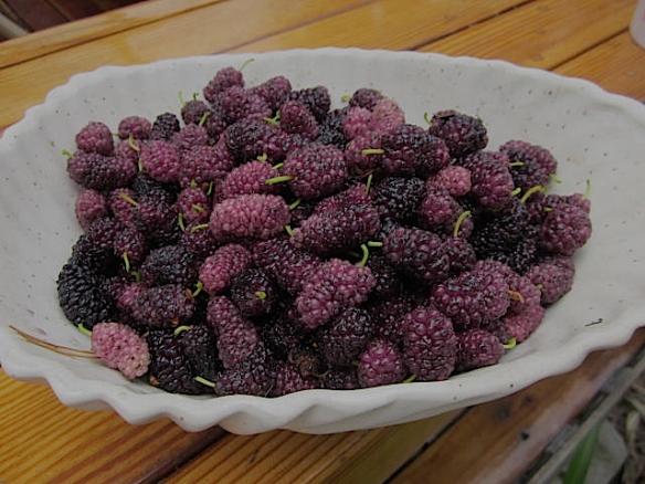 mulberrybowl