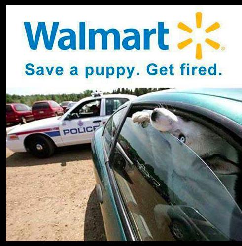 Walmart puppy
