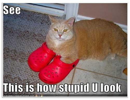 cats in crocs