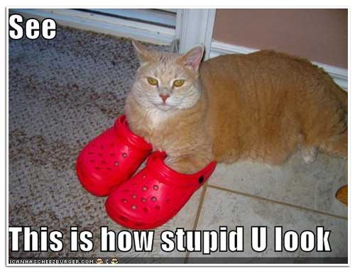 cats in crocs