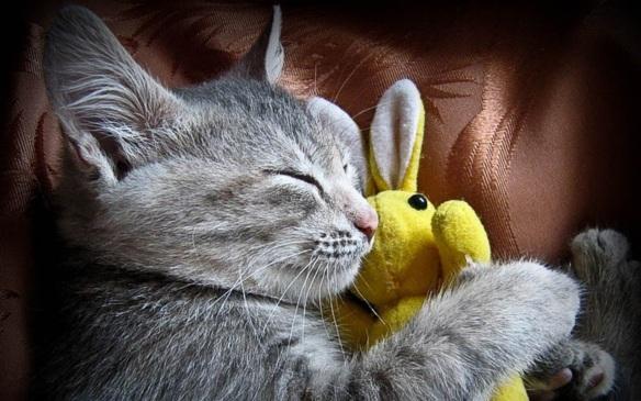 Cute-Kitten-kittens-16096759-1280-800