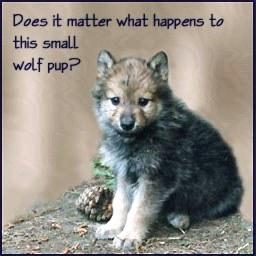 baby_wolf_button