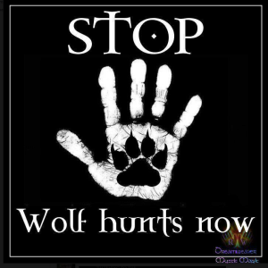 Stop Wolf Hunts Now