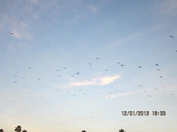 Decbirds