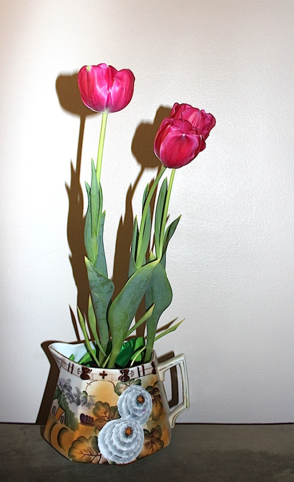 tulipshadow