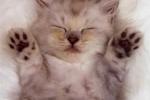 kitty-jazz-hands