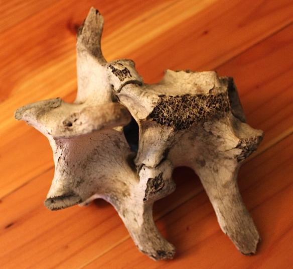 bisonbone