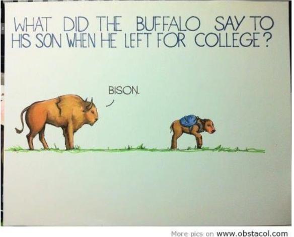 bisonjoke