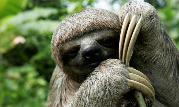 https://c402277.ssl.cf1.rackcdn.com/photos/6526/images/story_full_width/sloth_(c)_Jorge_Salas_International_Expeditions.JPG?1394634201