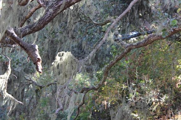 bigsurcrazytree