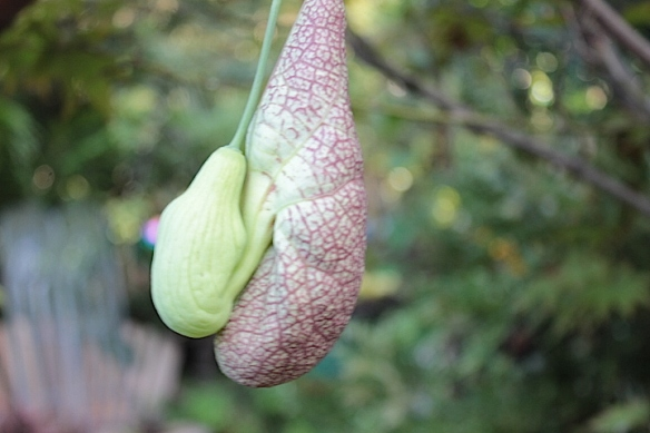 plantplayweirdplant