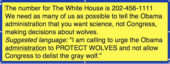 whitehousewolf