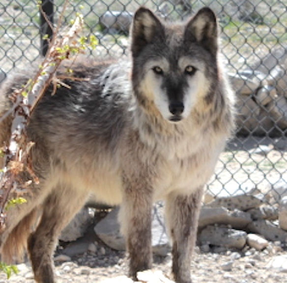 Wolf Mountain Sanctuary