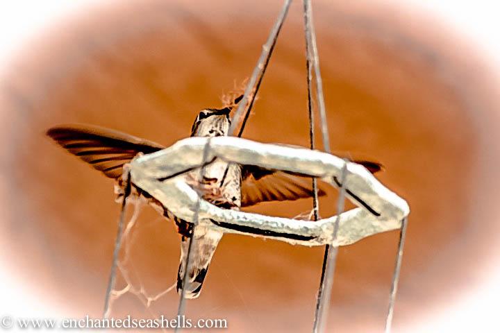 hummingbirdwings