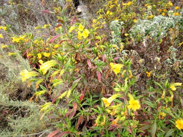 campingmaymontanaflowers