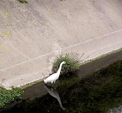egret2015