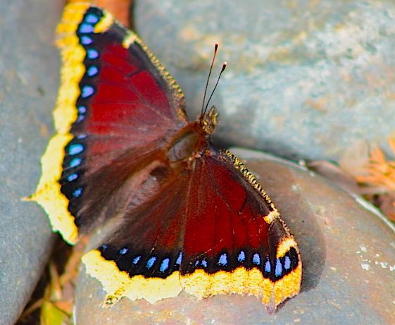 butterflyrock5
