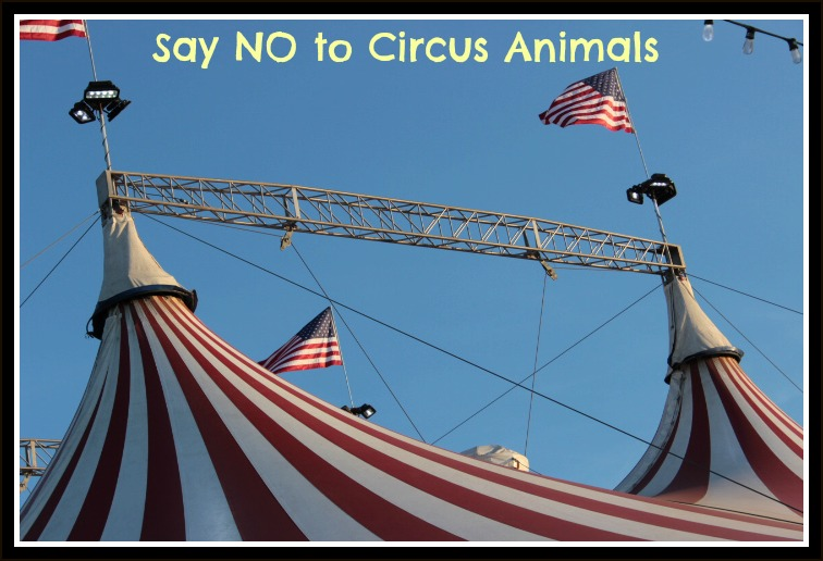 Circus Text