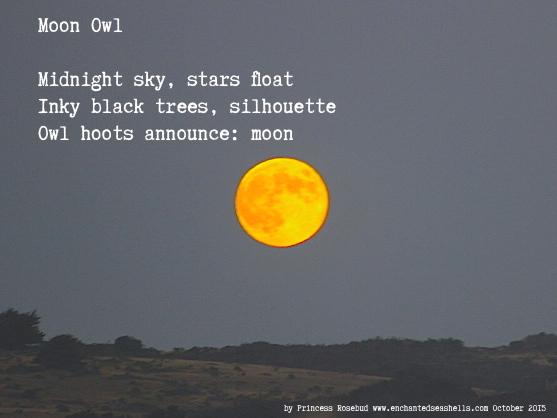 moonowlhaiku
