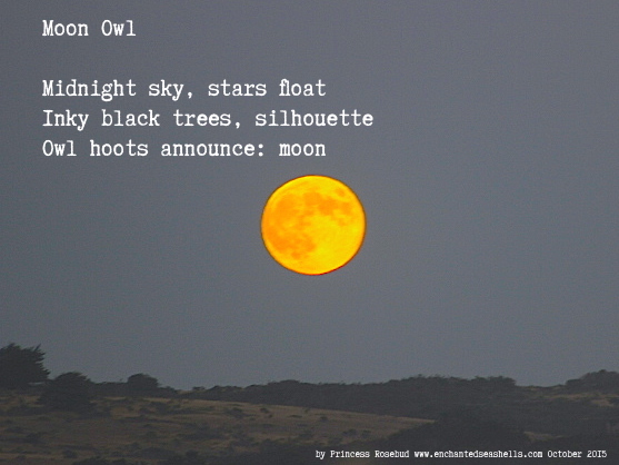 moonowlhaiku