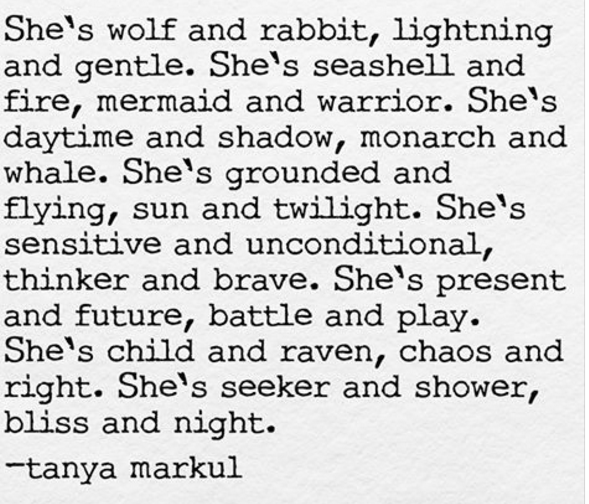 wolf rabbit seashell